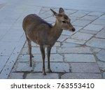 wild deer and famous for... | Shutterstock . vector #763553410