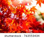 red maple leaves in autumn in... | Shutterstock . vector #763553434