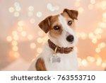 dog breed jack russel terrier... | Shutterstock . vector #763553710