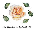 watercolor flower  hand painted ... | Shutterstock . vector #763607260