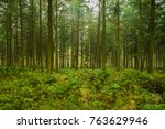 view in the forest in autumn | Shutterstock . vector #763629946