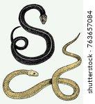 viper snake. serpent cobra and...   Shutterstock .eps vector #763657084