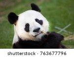 Giant Panda Ailuropoda Melanoleuca Wildlife - Fine Art prints