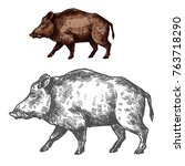 boar wild animal sketch vector