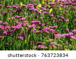 field of pink flowers with... | Shutterstock . vector #763723834