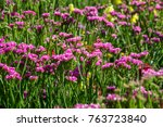 field of pink flowers with... | Shutterstock . vector #763723840