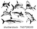 Graphical Set Of Sharks...