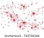 blossom flowers  buds and... | Shutterstock .eps vector #763736266