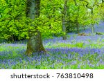 beautiful oak tree in the... | Shutterstock . vector #763810498