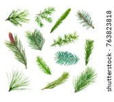 set of coniferous branches... | Shutterstock . vector #763823818