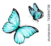 beautiful blue butterfly... | Shutterstock . vector #763846738