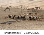 sheep and camels at farm in... | Shutterstock . vector #763920823