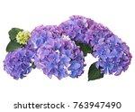 beautiful purple hydrangea... | Shutterstock . vector #763947490