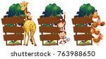 wooden signs with giraffe and... | Shutterstock .eps vector #763988650