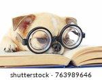 chihuahua dog wear nerd glasses ...   Shutterstock . vector #763989646