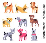 pedigree dogs with unusual... | Shutterstock .eps vector #764080300