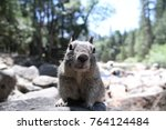 cute and curious squirrel in... | Shutterstock . vector #764124484