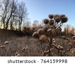 frozen plant herb. frost frost... | Shutterstock . vector #764159998