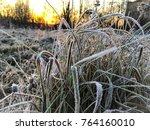 frozen plant herb. frost frost... | Shutterstock . vector #764160010