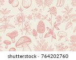 forest plants and mushrooms...   Shutterstock .eps vector #764202760