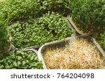 assortment of micro greens....   Shutterstock . vector #764204098