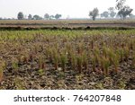rural india agriculture land... | Shutterstock . vector #764207848