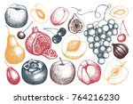 vintage fruits and berries  ... | Shutterstock .eps vector #764216230
