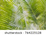 palm tree background  tropical... | Shutterstock . vector #764225128