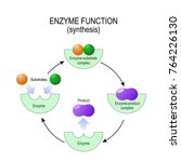 enzyme function. synthesis.... | Shutterstock .eps vector #764226130