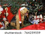 airedale terrier wishing a...   Shutterstock . vector #764259559