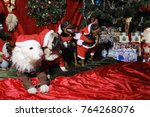 dogs  pets wishing a merry...   Shutterstock . vector #764268076