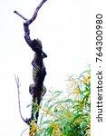 in selective focus a water... | Shutterstock . vector #764300980