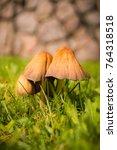 Small photo of Autumn mushrooms in the garden. Season of Indian summer