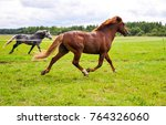 Stock photo horse racing in field 764326060