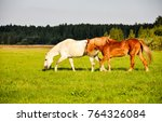 Stock photo two horses in field 764326084