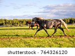 Stock photo horse racing in field 764326120