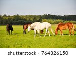 Small photo of Herd of horses on pasture field