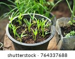seedling grow indoor. | Shutterstock . vector #764337688