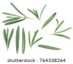 rosemary herb. macro shot of... | Shutterstock . vector #764338264