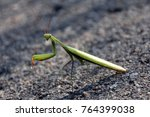 Grasshopper  Green Grasshopper...