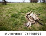Dead Cow Skeleton With Skin...