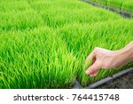 hand on the small little sprout ... | Shutterstock . vector #764415748