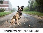 portrait of beautiful happy dog ... | Shutterstock . vector #764431630