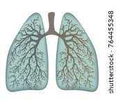 human lungs. respiratory system.... | Shutterstock .eps vector #764455348