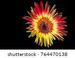 multi colored small gerberal... | Shutterstock . vector #764470138