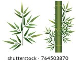 bamboo and green leaf   Shutterstock .eps vector #764503870