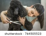Grooming A Little Dog In A Hai...