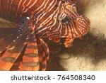 lionfish  pristine scuba diving ... | Shutterstock . vector #764508340