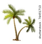 Two Tropical Palm Tree Isolate...