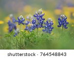 Wildflower Field With Texas...